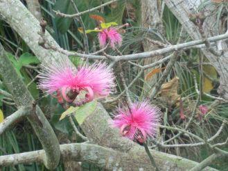 i-cienfuegos-botanischer-garten-2