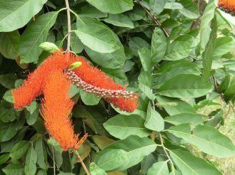 i-cienfuegos-botanischer-garten-3