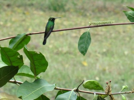 i-cienfuegos-kolibri