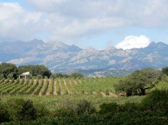 Sardinien - Weingut