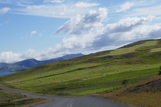 Island - grüne Hügellandschaft im Süden