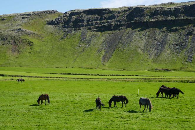 Island - grüne Hügellandschaft mit Pferden