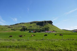 Island - grüne Landschaft im Süden