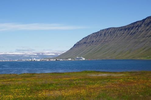 Island - Isafjördur - Fjord, Blumenwiese, MS Amadea