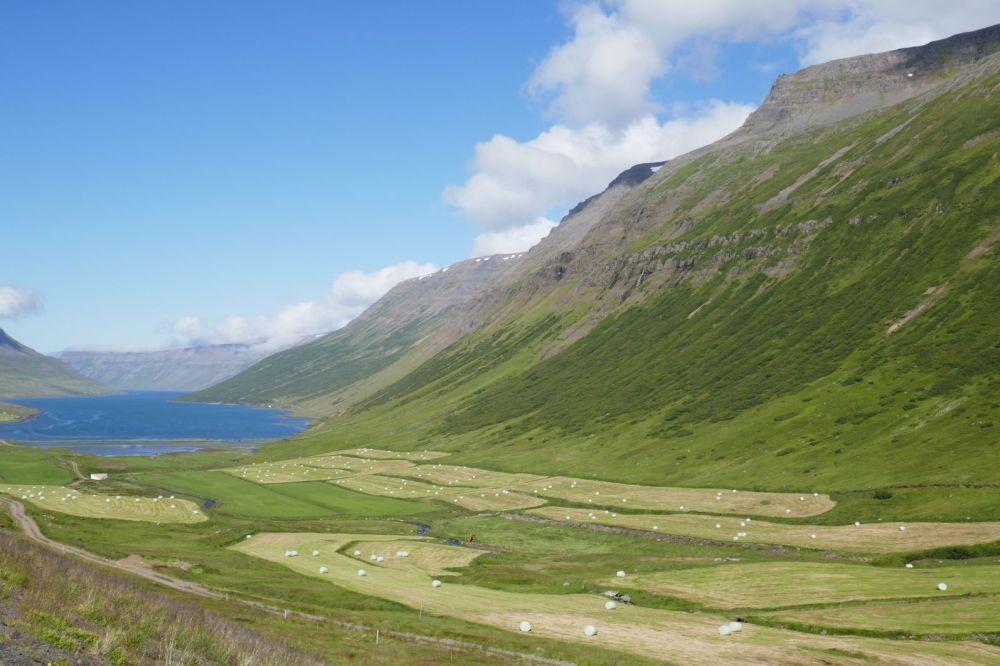 Island - Isafjördur - Fjord