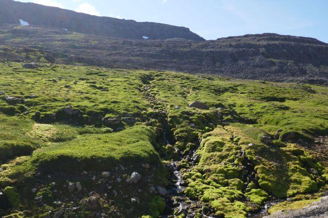 Island - Isafjördur - Mooslandschaft