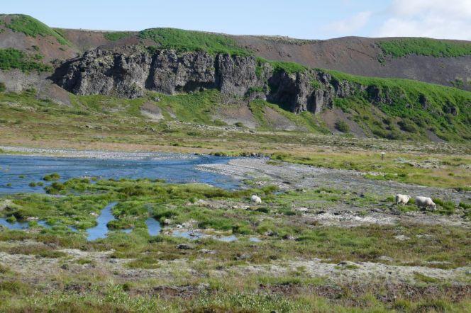 Island - Schafe in der Fluss-Landschaft
