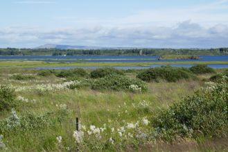 Island - Seen und Wiesen