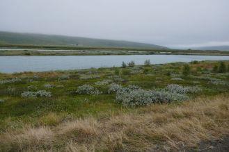Island - Akureyri - Flusslandschaft am Godafoss-3
