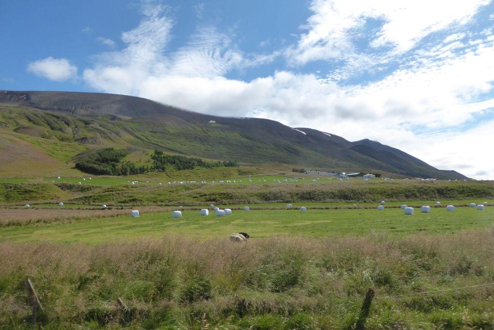 Island - Akureyri - Flusstal Richtung Grenivik-3