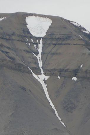 Spitzbergen - Schneerose