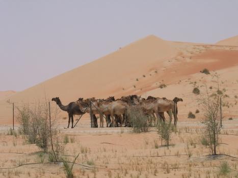 Wüste - Kopie