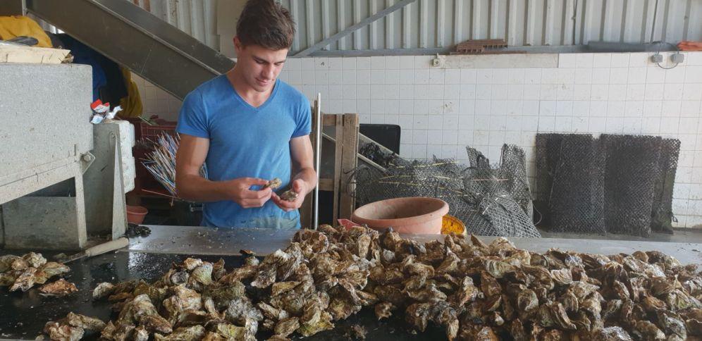 Austern sortieren