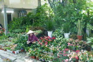 Hanoi - Blumenhändlerin am Straßenrand