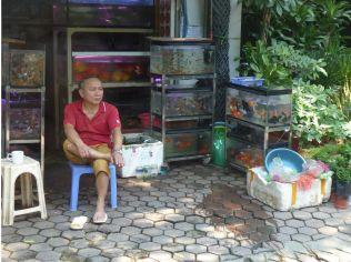Hanoi - Laden für Zierfische