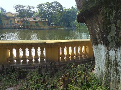 Hanoi - II - Ho Chi Minh Haus - Park, Wurzeln