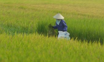 Hanoi-Halong - Landschaft-10